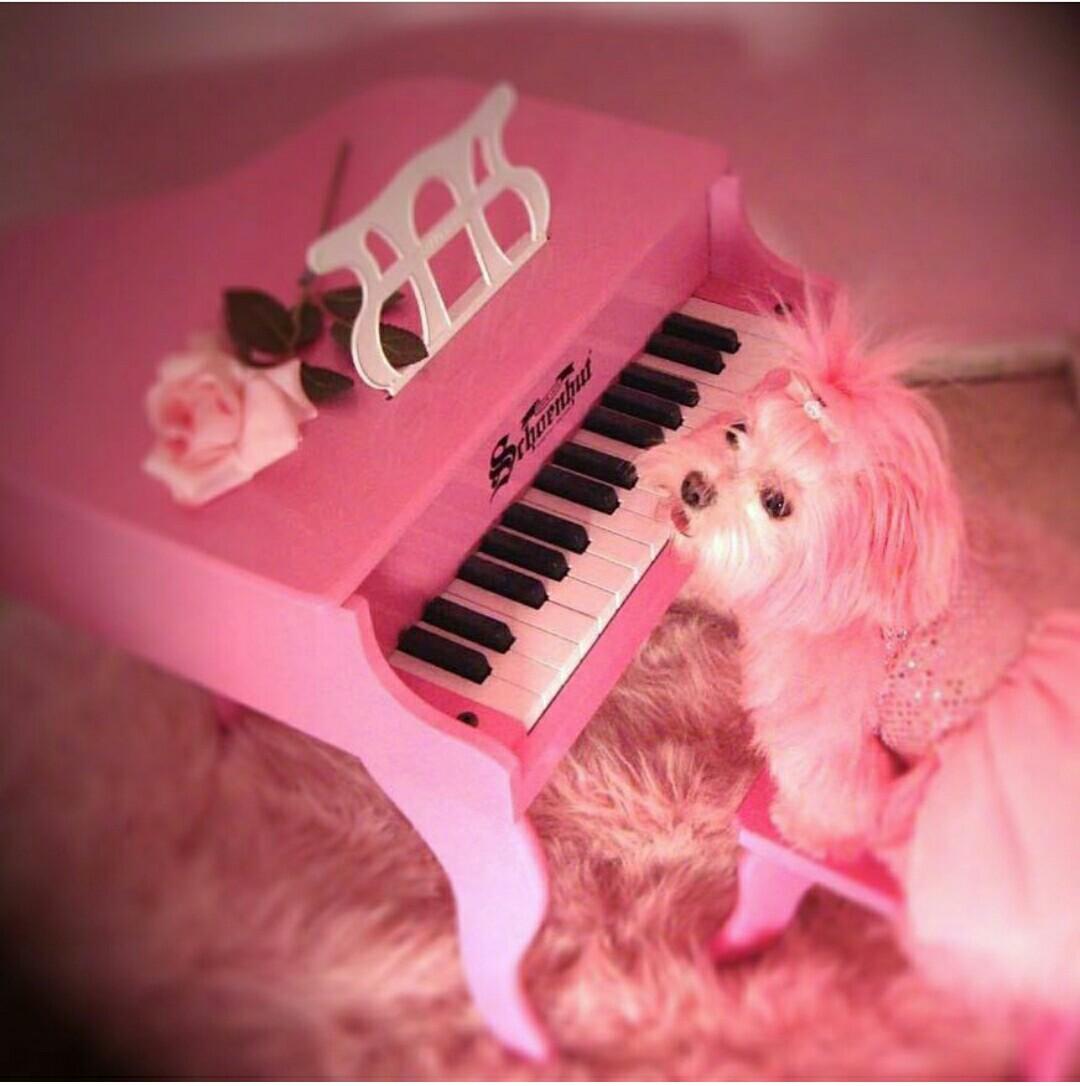 pink woman kitten key Sera